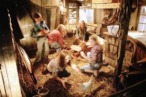 Žáby k zulíbání - Die Wilden Hühner