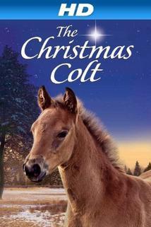 The Christmas Colt