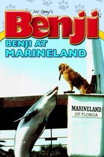 Benji Takes a Dive at Marineland