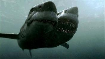 Dvouhlavý žralok útočí
