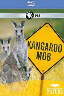 Klokaní mafie  - Kangaroo Mob