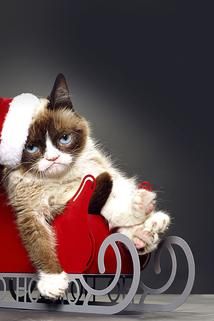 Grumpy Cat's Worst Christmas Ever  - Grumpy Cat's Worst Christmas Ever