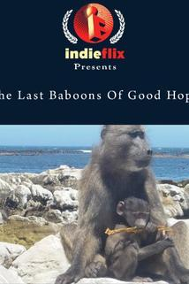 The Last Baboons of Good Hope