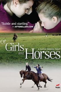 O holkách a koních