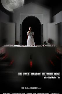 The Sweet Hand of the White Rose