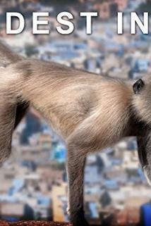 Wildest India ()  - Wildest India ()