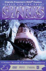 Pátrání po velkém žralokovi