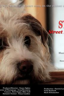 Stetson, Street Dog of Park City