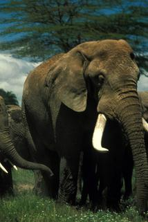 Echo and the Elephants of Amboseli