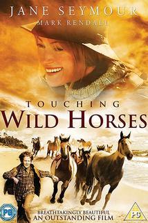 Dotyk divokých koní