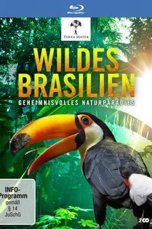 Wildes Brasilien - Der zerbrechliche Wald
