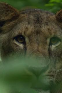 Äthiopien - Im Hochland der Wölfe