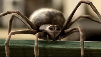Šarlotina pavučinka
