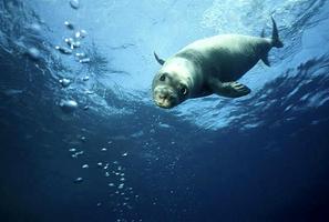 Mír s tuleni