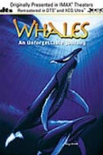 Velryby: Nezapomenutelná cesta  - Whales: An Unforgettable Journey