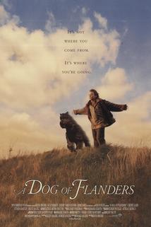Flanderský pes