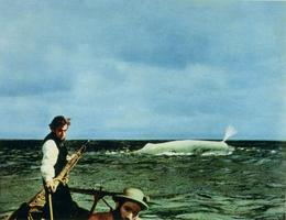 Bílá velryba