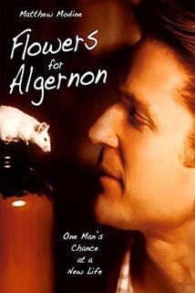 Kytička pro Algernona