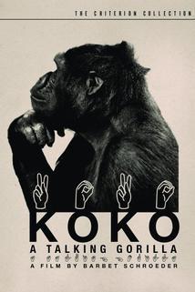 Koko, le gorille qui parle