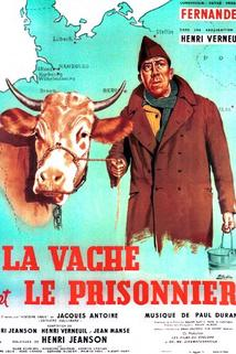 Kráva a zajatec