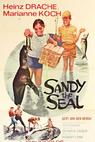 Sandy the Seal