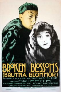 Zlomený květ  - Broken Blossoms or The Yellow Man and the Girl