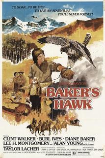 Bakerův jestřáb