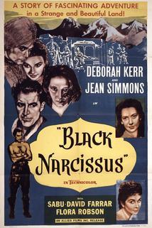 Černý narcis