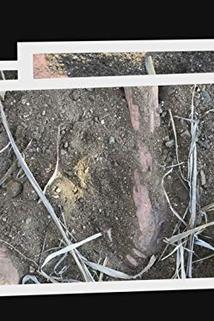 Buried in the Backyard - Guilt or Innocence  - Guilt or Innocence
