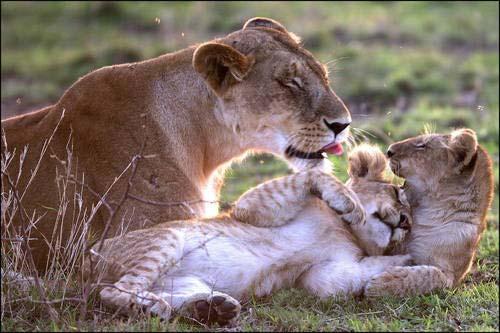Zamilovaná zvířata