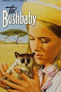 The Bushbaby  - The Bushbaby