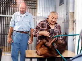 O zvířatech a lidech