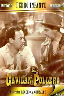 Gavilán pollero, El