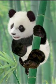Save the Panda!