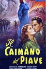 Caimano del Piave, Il (1951)