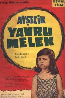 Aysecik - Yavru Melek