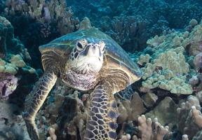 Velké podmořské dobrodružství 3D