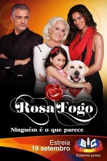 Rosa Fogo