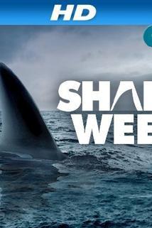 Ocean of Fear: Worst Shark Attack Ever  - Ocean of Fear: Worst Shark Attack Ever