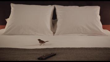 Ptáci a lidé
