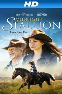 Midnight Stallion  - Midnight Stallion