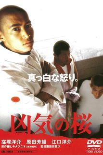 Kyoki no sakura