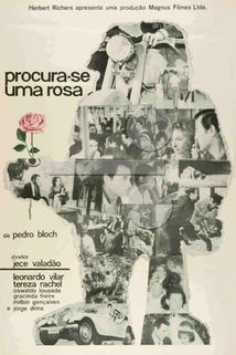 Procura-se uma Rosa