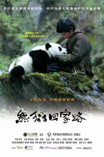 Dobrodružství s pandou