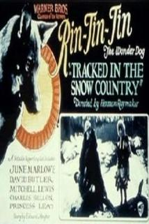 Tracked in the Snow Country