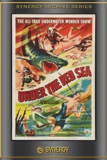 Abenteuer im Roten Meer