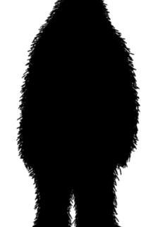 Hair of the Sasquatch