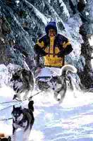 Sněžní psi