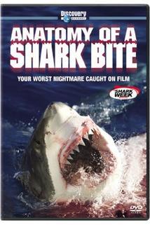 Anatomy of a Shark Bite  - Anatomy of a Shark Bite