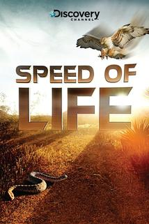 Speed of Life  - Speed of Life